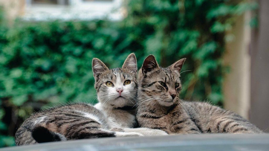 фото кошек с картинками этом