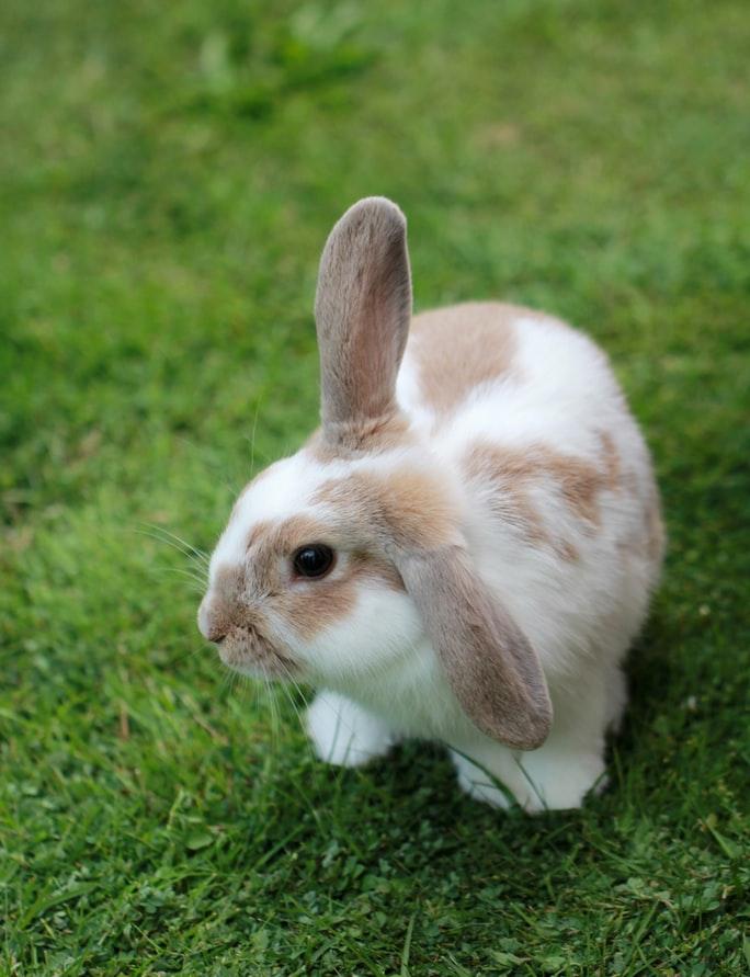 Правильные кролики картинка