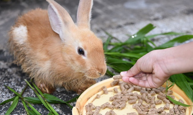 Какой корм выбрать для кроликов