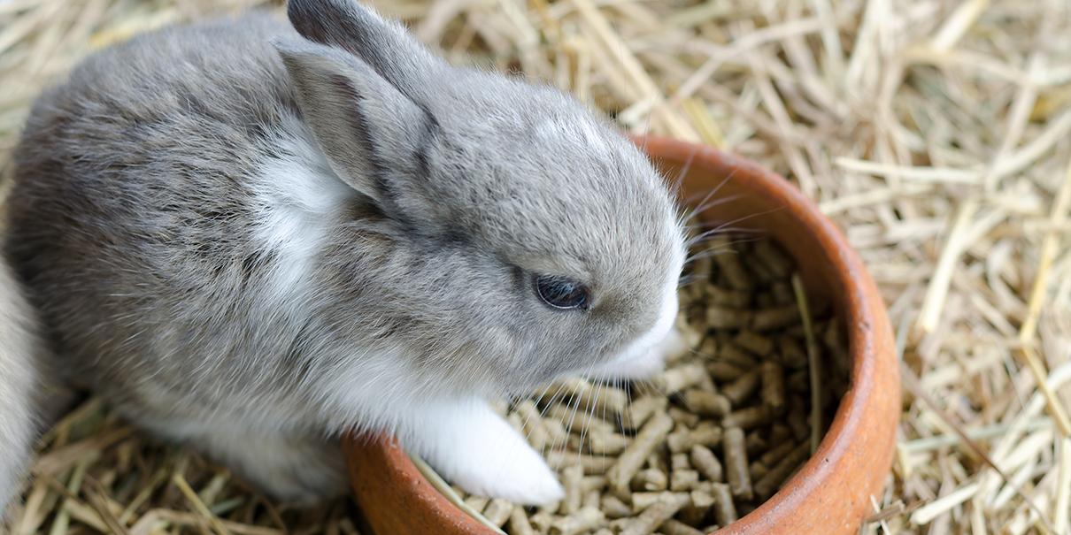 Какой корм выбрать для кроликов.